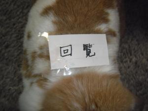2011_05295290003