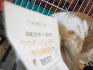 2011_102790072